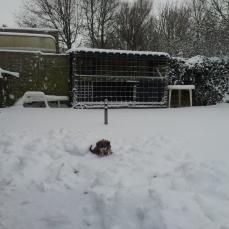 15-1-2013-zo-jong-nog-en-dan-al-in-de-sneeuw
